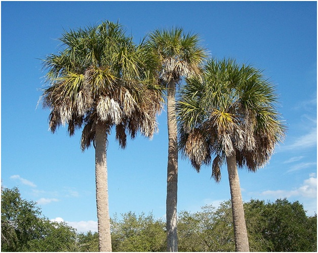 What Is The State Tree of South Carolina?