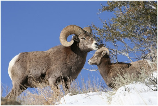 What is the State Animal of Colorado?