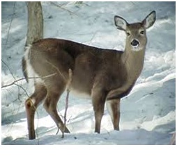 What is the State Animal of New Hampshire?
