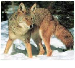 What is the State animal of South Dakota?