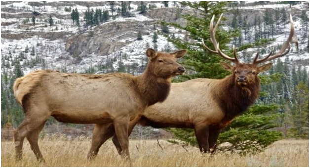 What is the State animal of Utah?