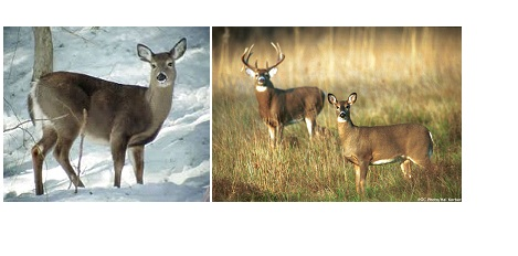 What is the State wildlife animal of Wisconsin?