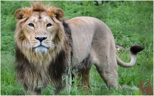 What is the National Animal of Luxembourg?