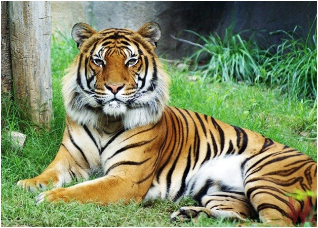 What is the National animal of Malaysia?