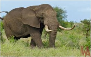What is the National animal of Mozambique?