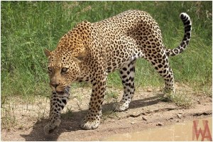 What is the National animal of Somalia?