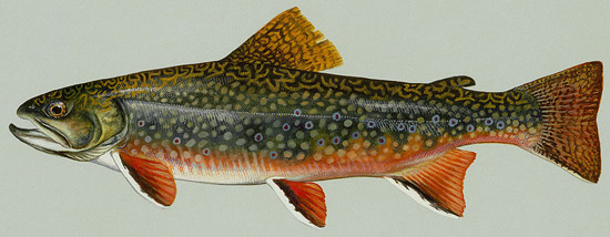 State Fish Of West Virginia