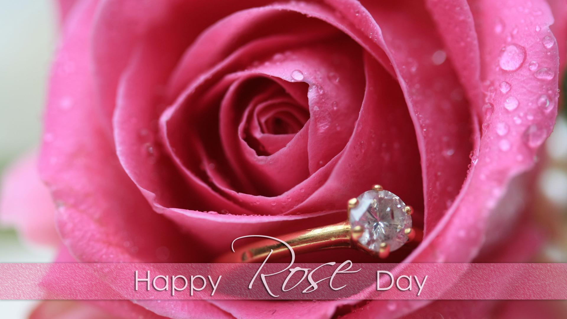 Blingee Cute Wallpaper Rose Day Images For Whatsapp Dp Profile Wallpapers Free