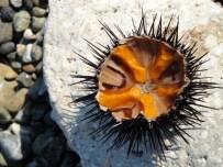 """Sea Urchin Salad. """"Ahinosalata"""" ©"""