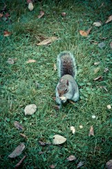 Hyde Park - Squirrel Food