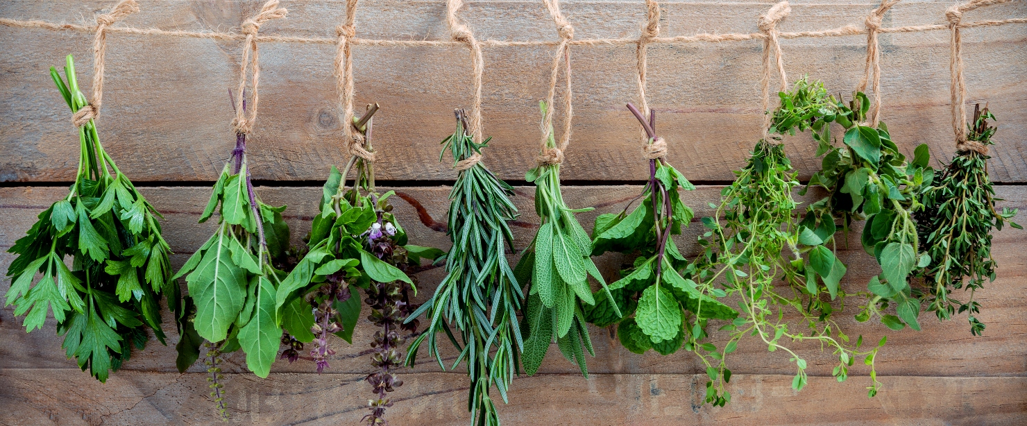 herbs you haven't heard of: herbs hanging on wooden wall