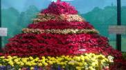 republic-day-flower-show-january-2017-at-glass-house-lalbagh-bengaluru-11
