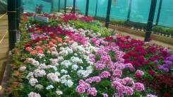 republic-day-flower-show-january-2017-at-glass-house-lalbagh-bengaluru-13