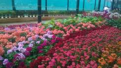 republic-day-flower-show-january-2017-at-glass-house-lalbagh-bengaluru-15
