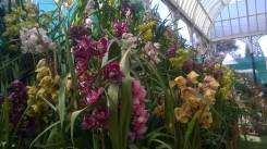 republic-day-flower-show-january-2017-at-glass-house-lalbagh-bengaluru-30