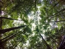 Yorktown trees