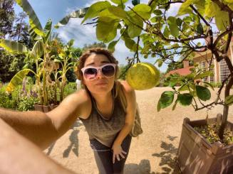 the gardens were so impressive! this fruit was the size of my face!