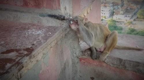 Monkey temple BOSS