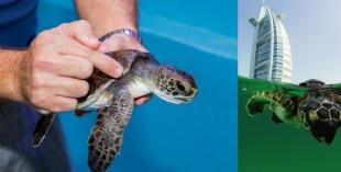 Turtle rehab featured