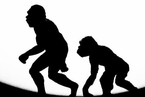 earth and sky - ape
