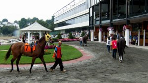 Racehorse Warming Up Training
