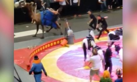 6 children, 1 adult injured by camel at Pittsburgh circus