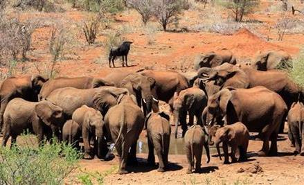 AP PHOTOS: SAfrica rangers train to fight poaching
