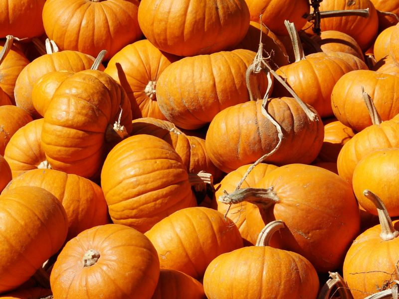 Trinity Church Pumpkin