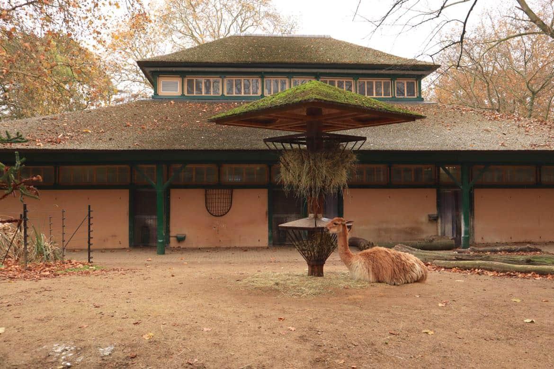 Zoo Amsterdam