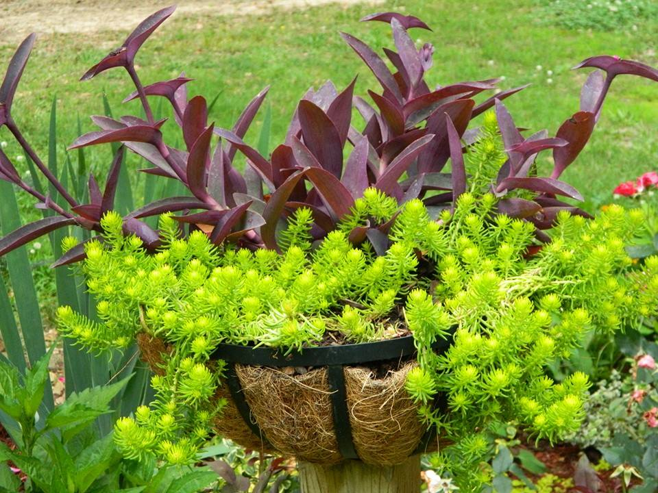 colorful planter