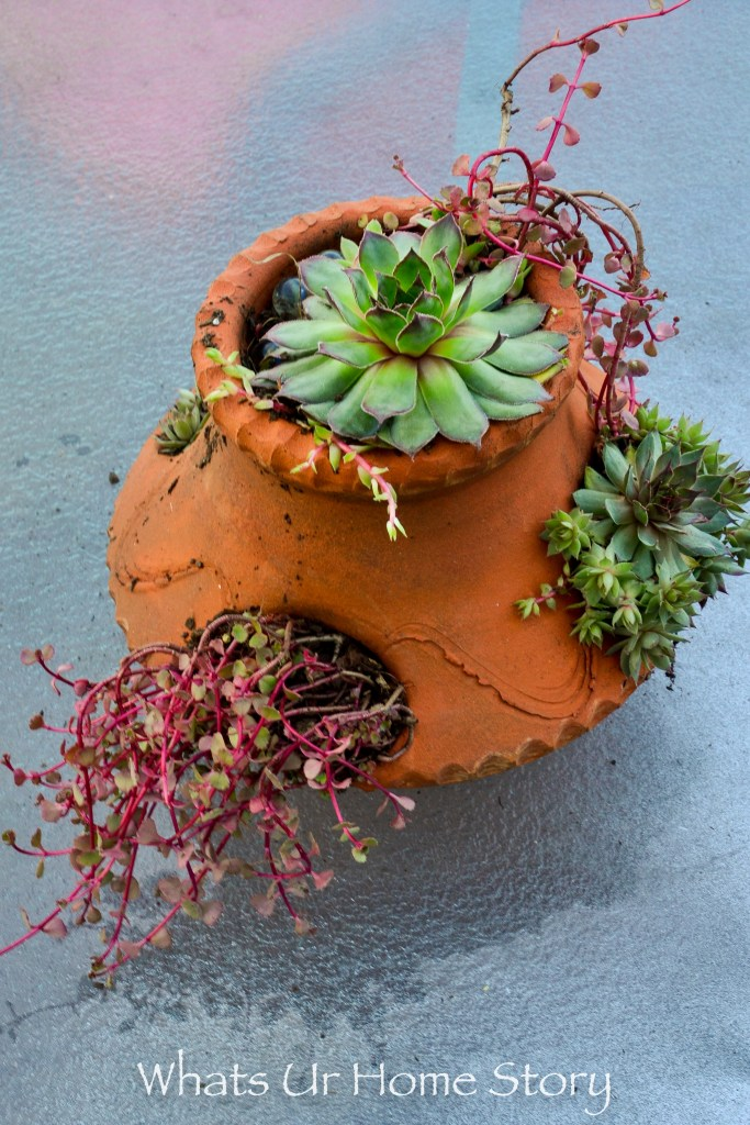 container garden ideas -Succulent ground cover strawberry pot planter