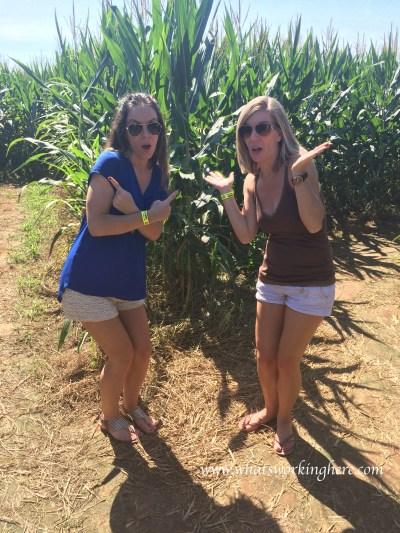 P-6 Farms Corn Maze-which way