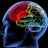 10 Interesting Facts About Brain