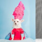 Who Let the Dogs Out (on the runway) · Anthony Rubio presents Canine Couture for NYFW