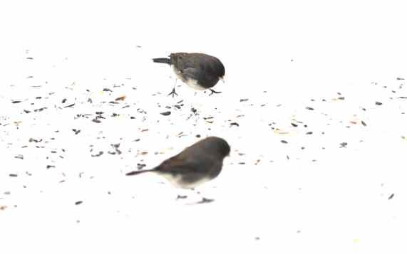 BirdRadiant5