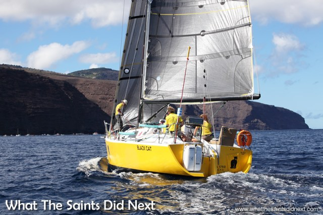 Governor's Cup Yacht Race 2014/15 Black Cat on final approach to James Bay, skippered by Dave Immelman.