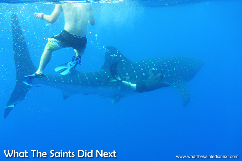 Other swimmers in the group swimming with whale sharks on our trip.