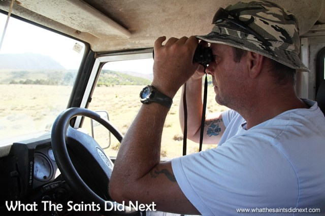 Kevin George scans the field for tell tale activity of the St Helena wirebird.