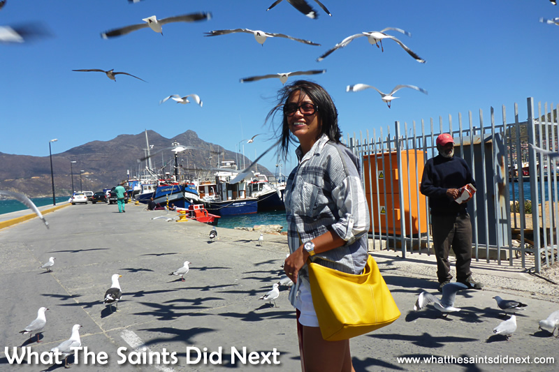 Trying not to become a 'target' for the hundreds of seagulls at Hout Bay Cape Town.