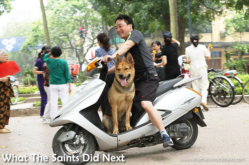 Pet dogs of all sizes are trained to ride in the footwell of mopeds. This was the biggest dog we saw doing this.