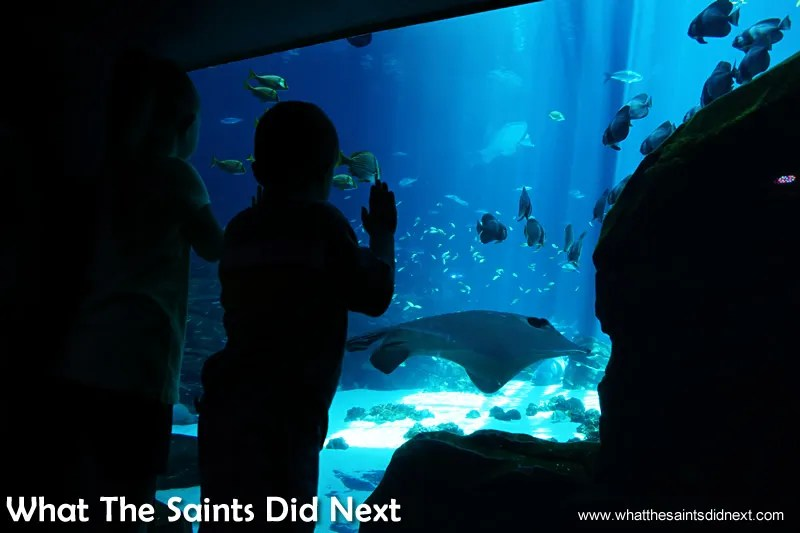 The best visitor attraction In Atlanta - A youngster is captivated by the giant fish at Georgia Aquarium.