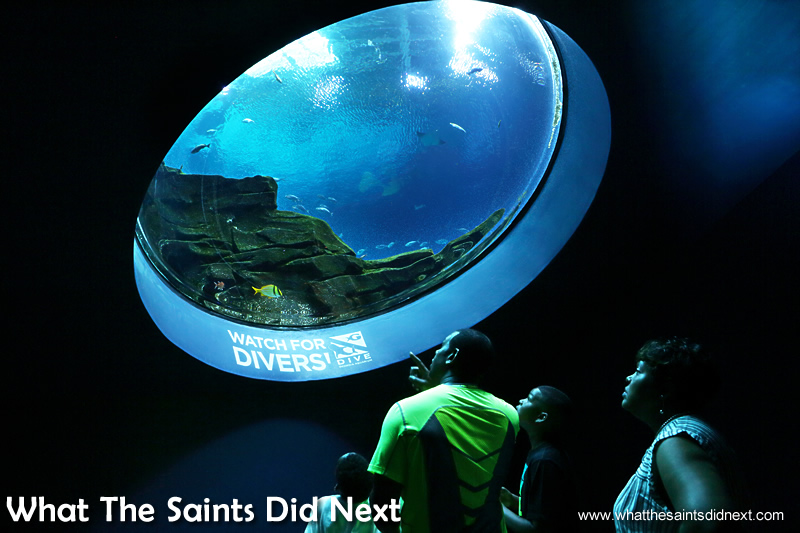 The large array of tanks and viewing windows make Georgia Aquarium one of the best in the world and probably the best visitor attraction In Atlanta.