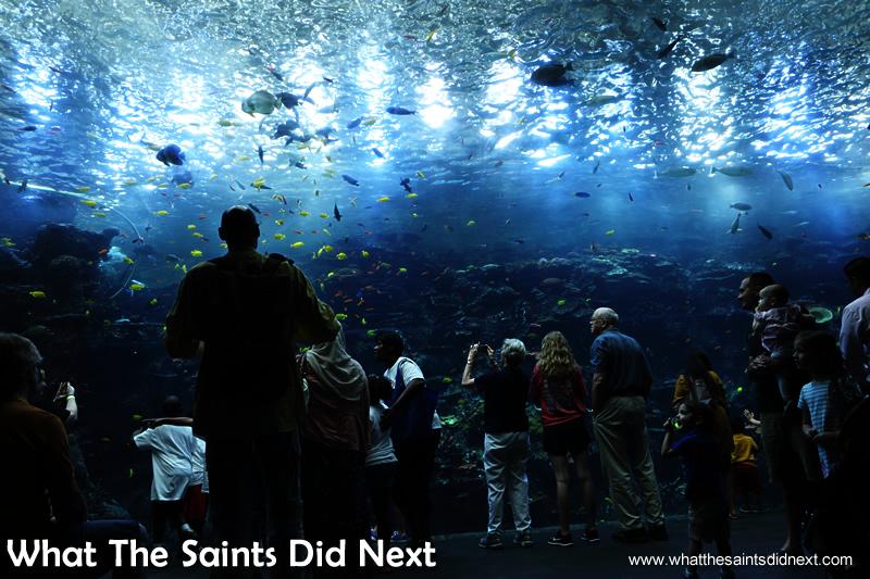 Largest Aquarium in the World - Atlanta's Six Million ...