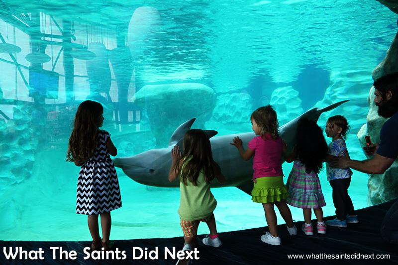 Atlanta sea aquarium dolphins putting on a show for the youngsters outside the tank window.