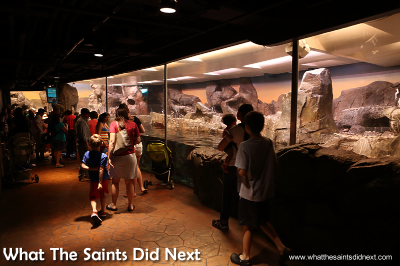 The best visitor attraction In Atlanta - The Penguins of the World display.