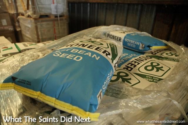 Soybean seed in the warehouse alongside the grain escalator.