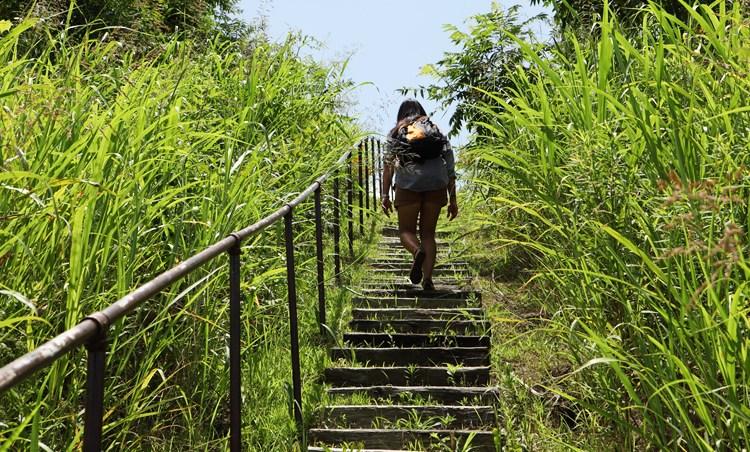Mississippi's Best Kept Secret: The Winterville Mounds