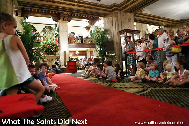 Peabody Hotel Memphis Ducks - Everyone is in position, the red carpet is down, we are ready for the march of the Peabody Ducks.