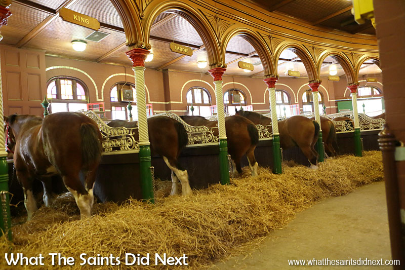 The Budweiser Clydesdale horses live in very smart stables on the Budweiser factory St Louis premises.