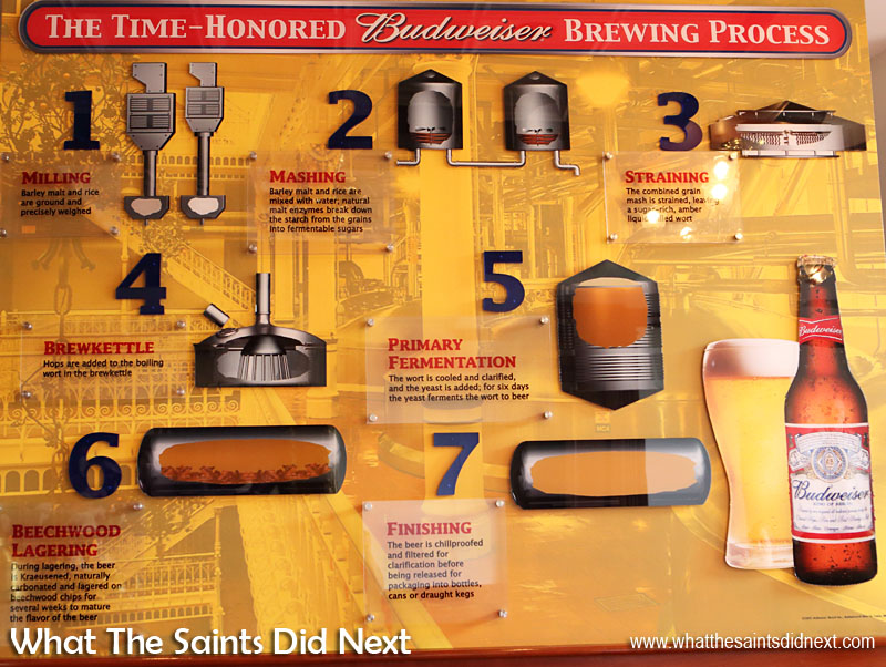 The Anheuser-Busch brewing process of an American Icon - Budweiser beer.